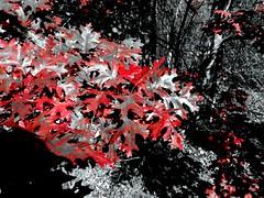 Mill Pond Park -- Autumn (81)