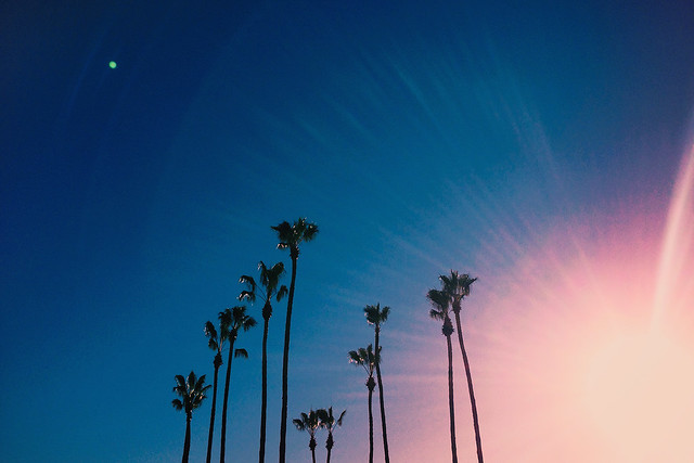 Palm trees in San Diego