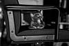 Metro Goldwyn kitten, present: