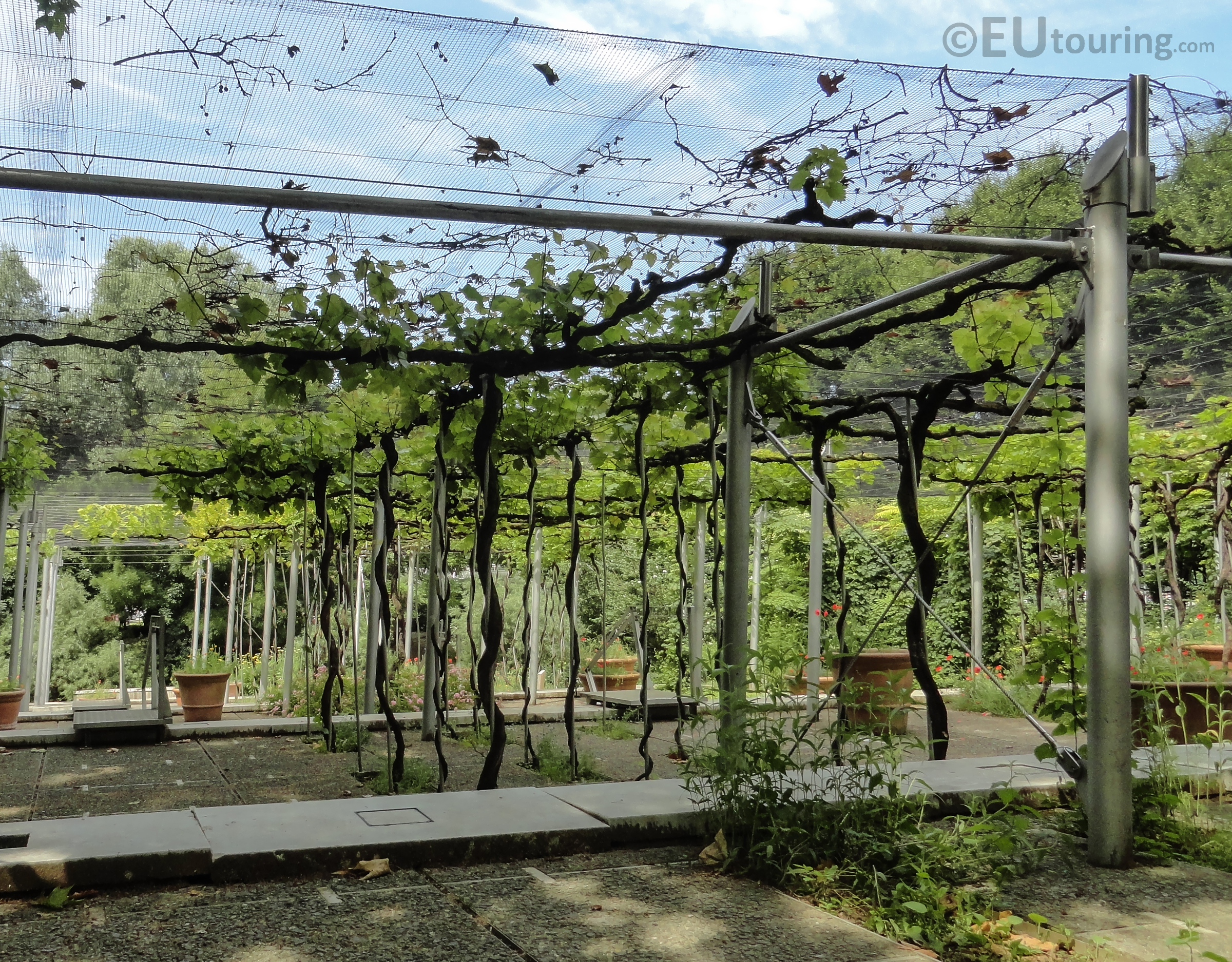 Vines and plants within Jardin de la Treille