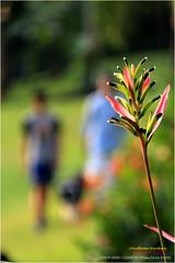 Singapore Botanic Garden in 2-9-2105