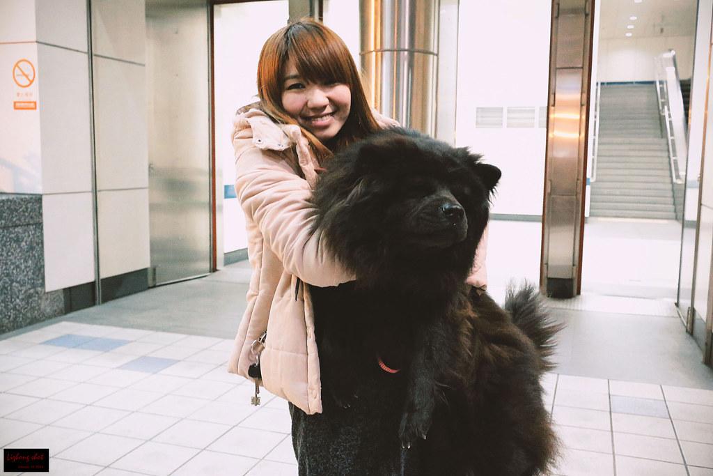 小狗台北街頭交朋友的那一夜