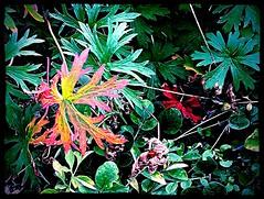 Maison Bras foliage