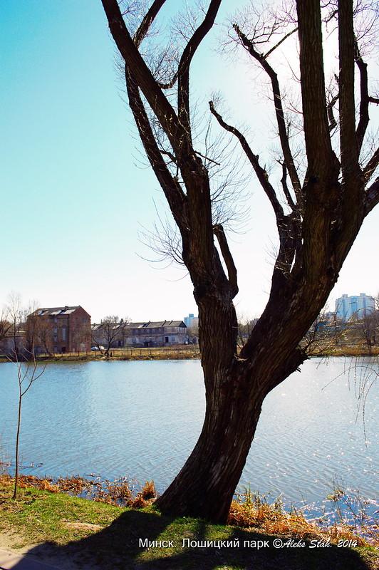 Лошицкий парк 015