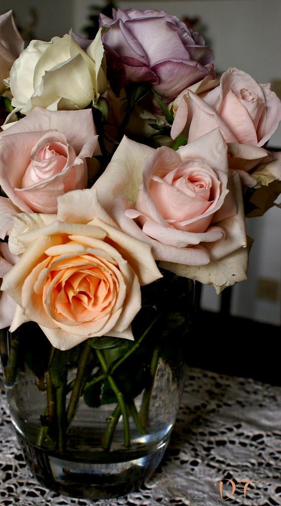 rose a (15)