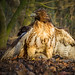 Red Tail by GREENGRASS F1