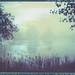 Foggy pond by Maija Karisma