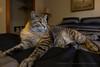 SLO Cat 1