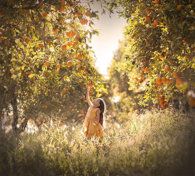 aleshurik - ..orange garden..