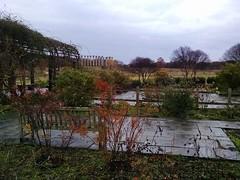 Heritage Rose Garden on a rainy late-November morning, National Herb Garden