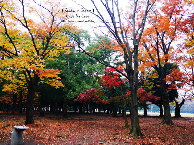 日本東京景點澀谷區代代木公園賞楓葉 (13)