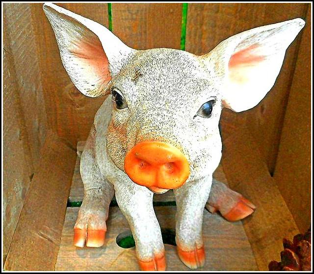 Piggy in a Box ..