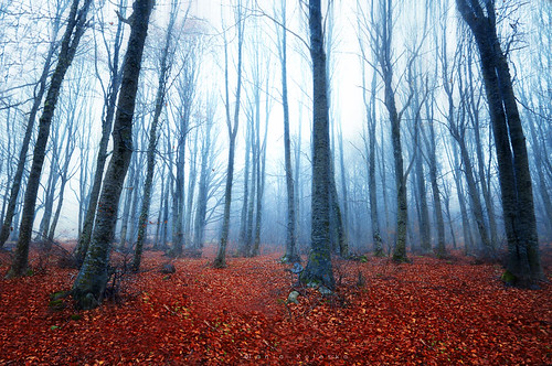 twilight mountain mountains blue trees tree fog foggy forest leaves winter automn goldcolors red redflower beautiful nature naturesfinest national nationalgeographic natgeo instagram sell buy art artphotography photography photographyart taniakoleska taniaphotos canon canoneos6d canonef1740mmf40lusm