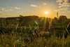 Sunset In The Tall Grass