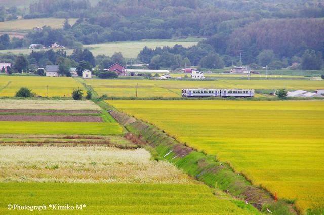 JR富良野線 西神楽駅~西聖和駅間