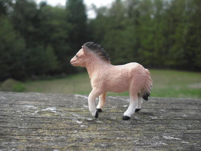 Shetland Pony Mare and Foal 21203285559_e890c1b95c_z