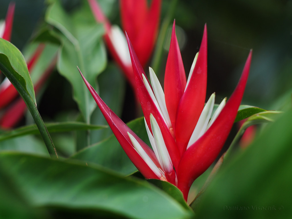 red flower_2