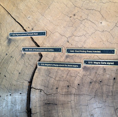 History In the Redwood Rings