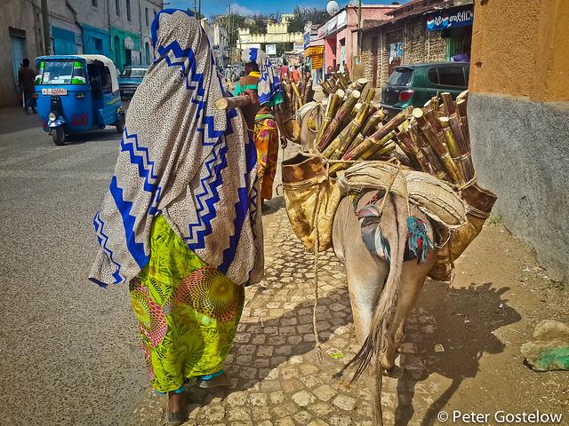 Sugar cane donkey