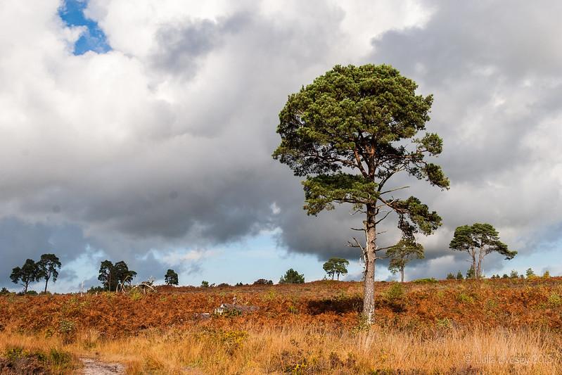 Tree on the heath