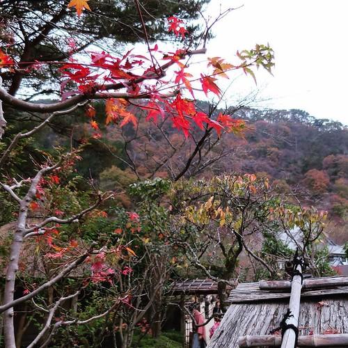 色づく山々。晴れてたらもっと紅葉きれいだったろうな。 #日光江戸村 #edowonderland