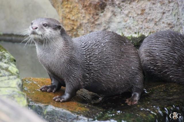 Besuch im Berliner Zoo 06.12.201579