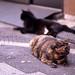上野の猫たち