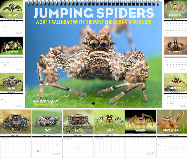 Jumping Spiders: A 2017 Calendar with the Most Endearing Arachnids