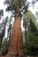 General Sherman at Sequoia National Park