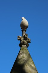 Seagull on a statue