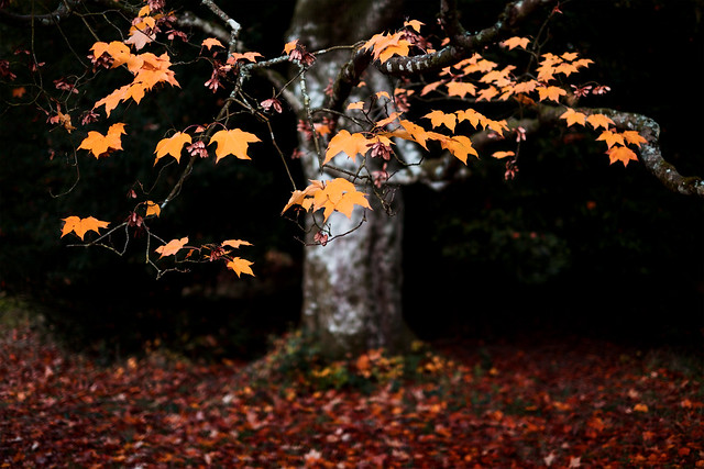 Photograph: [Untitled]; Westonbirt Arboretum, October 2016. By Simon Holliday.
