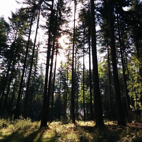 Rust. Stilte. Klimmen. Bossen. Zweten. #nofilter #Ardennen #countyourblessings #happyplace #hiking #dennenwoud