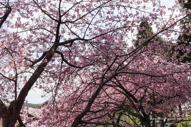 0402D8京都醍醐寺-1160309