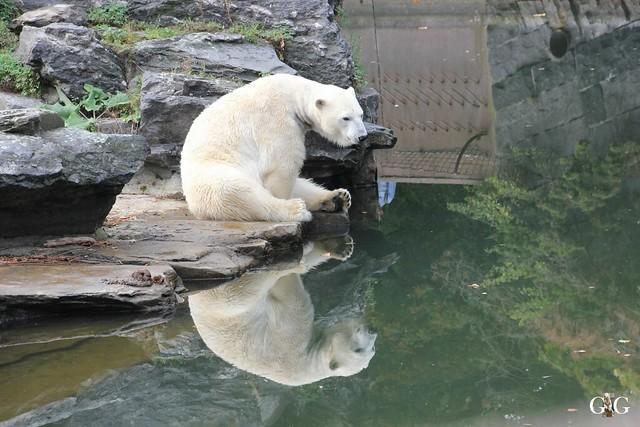 Sonntags-Besuch im Tierpark Friedrichsfelde 04.10.201514