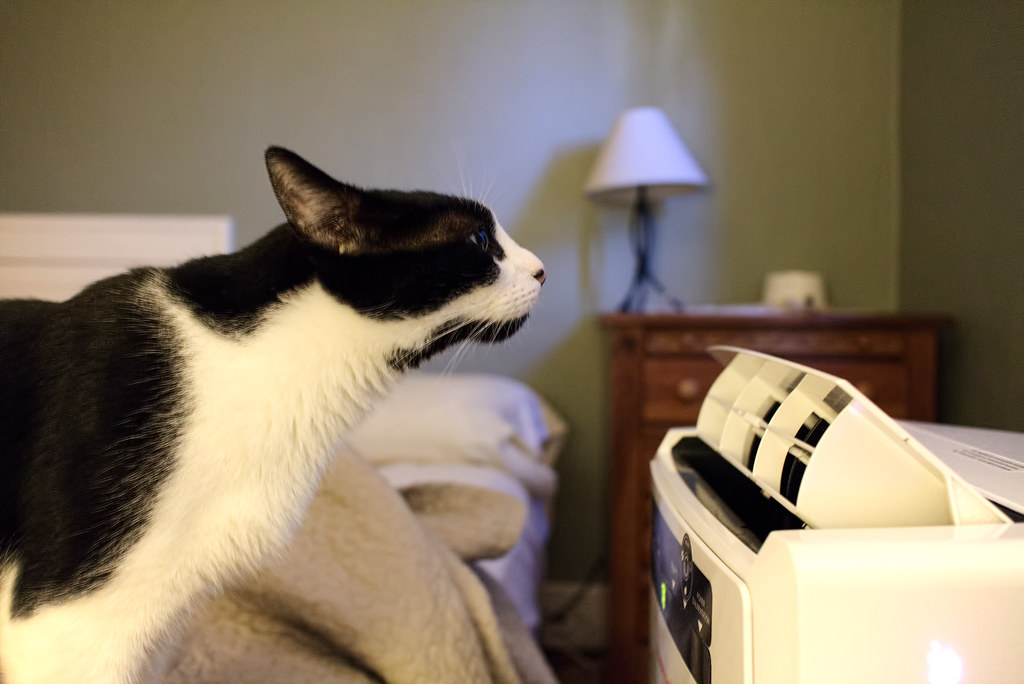 Our black-and-white cat Boo leans his face into the cool air coming out of the air conditioner