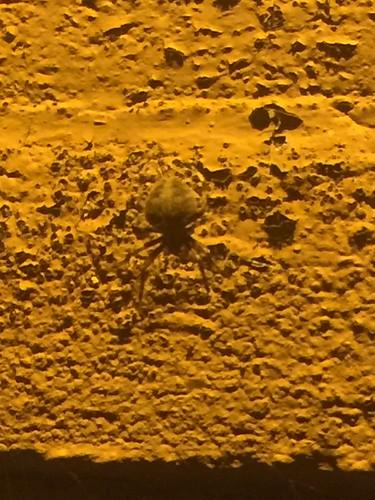 fauna night spider web arachnid