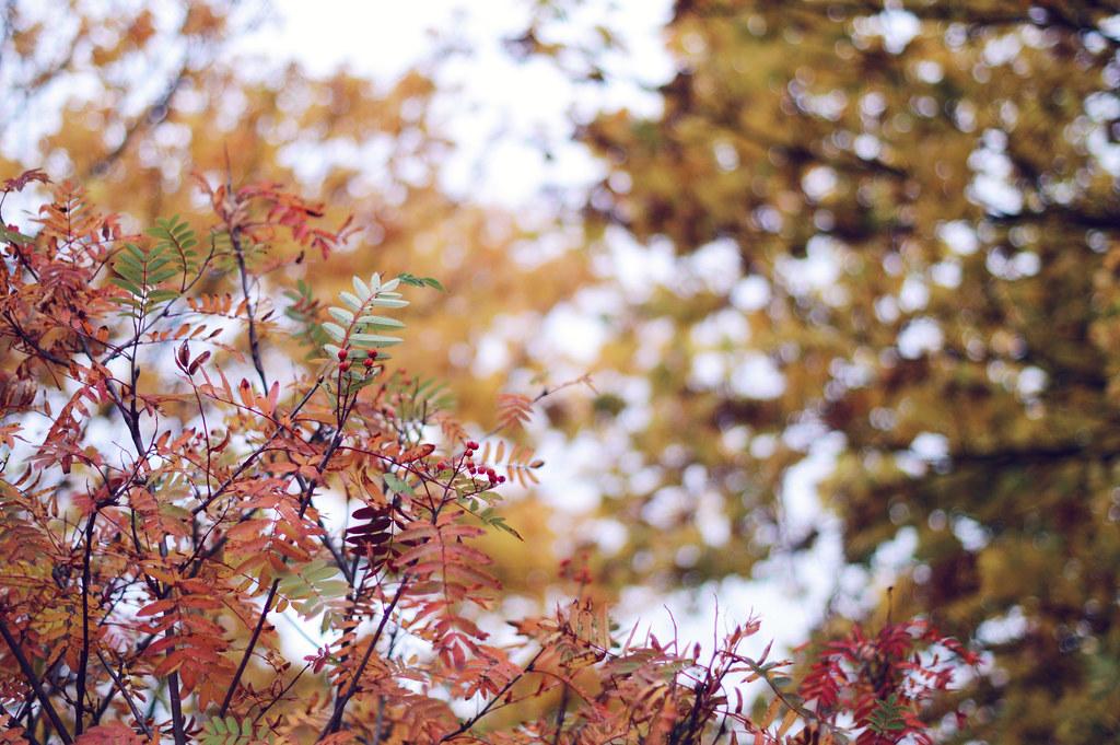 autumnwalk2
