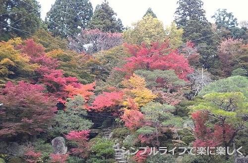 百済寺、庭園から見た景色