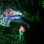 Zoo lights with Archer by bartlewife