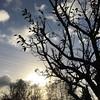 Sonne im Garten scheint wie die Sonne im Herzen, okay, sie strahlt halt nicht ;) #projektgarten #sun #treelove #instalove #spreadlovenotwar