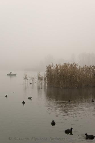 Sul Lago di Alserio