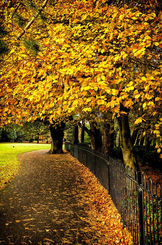12 11 Colderstones Park
