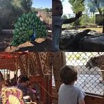 Fun day at the zoo by bartlewife
