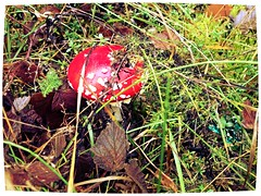 I've never trusted toadstools, but I suppose some must have their good points.