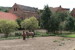 Mühle Zeddenbach,  die Pferde haben heute frei...