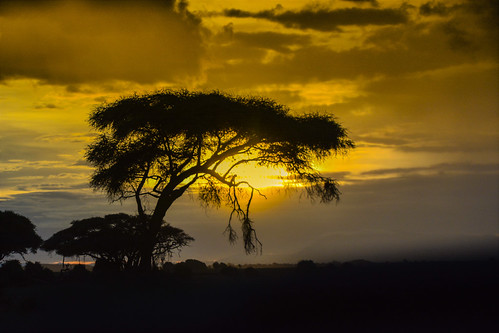 amboseli kajiadocounty kenya acacia árbol arbre tree amboselinationalpark contraluz ocaso sunset sun paisaje landscape