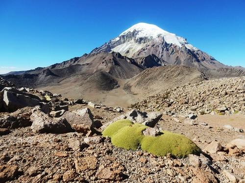 Sajama volcano - Bolivia