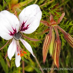 Spring flowers along the way at Jonkershoek Nature Reserve #southafrica #westerncape