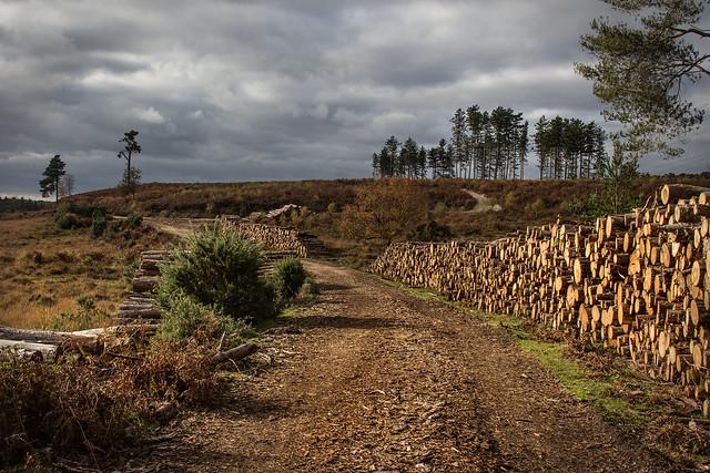 Logging, Hale Purlieu, Canon EOS 700D, Canon EF-S 18-55mm f/3.5-5.6 IS STM