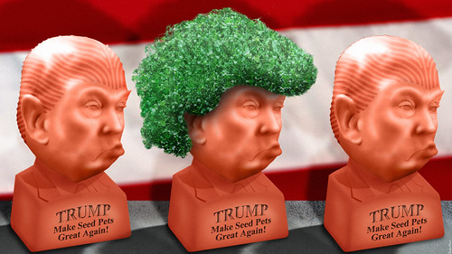 Donald Trump Seed Pet - The Greatest Seed Pet Ever!